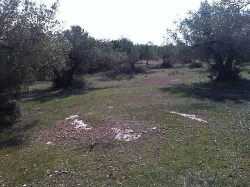 imagen 1 de Venta de finca con olivos y algarrobos en El Perelló (Tarragona)