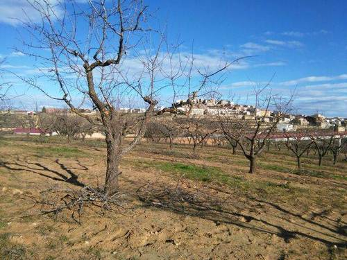 imagen 1 de Venta de finca de almendros en Batea (Tarragona)