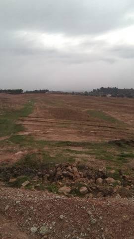 imagen 1 de Venta de finca de almendros en Flix (Tarragona)