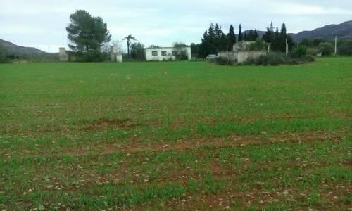 imagen 1 de Venta de finca llana de regadío en Ulldecona (Tarragona)