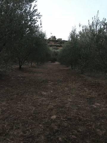 imagen 1 de Venta de finca de olivos de regadío en El Masroig