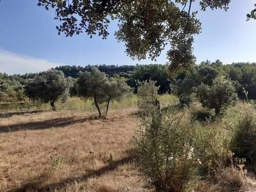 imagen 1 de Venta de finca de olivar en Horta de Sant Joan