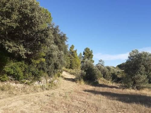 imagen 4 de Venta de finca de olivar en Horta de Sant Joan
