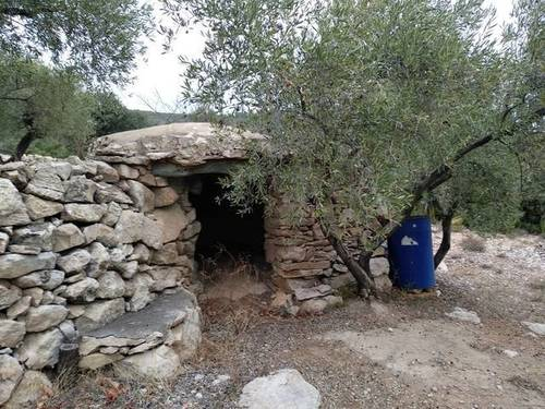 imagen 1 de Venta de finca de olivos en La Senia