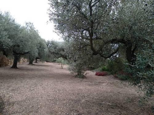 imagen 2 de Venta de finca de olivos en La Senia