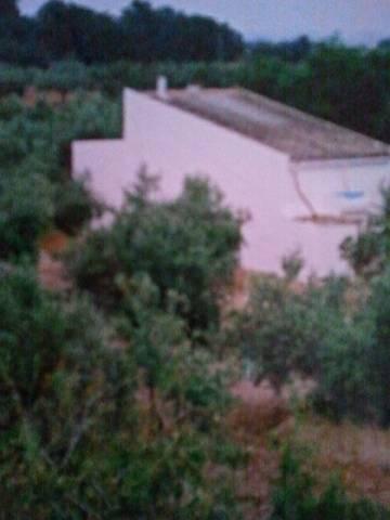 imagen 1 de Venta de terreno con olivos y pequeña casita en Aldea (Tarragona)