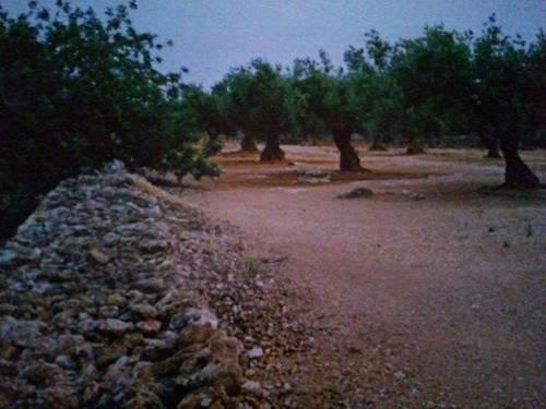 imagen 2 de Venta de terreno con olivos y pequeña casita en Aldea (Tarragona)
