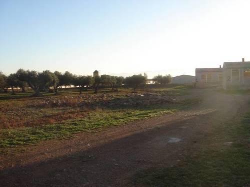 imagen 3 de Venta de granja de porcino en La Senia