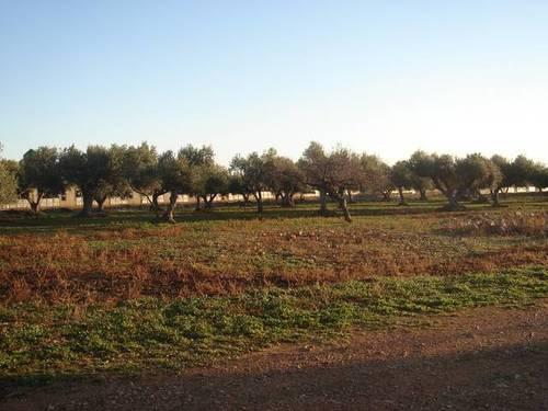 imagen 2 de Venta de granja de porcino en La Senia