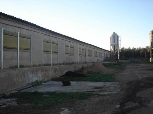 imagen 4 de Venta de granja de porcino en La Senia
