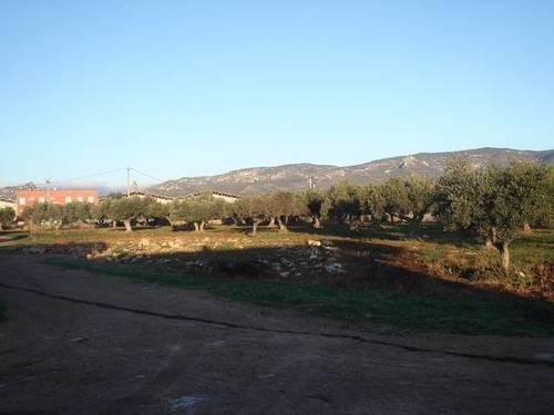 imagen 7 de Venta de granja de porcino en La Senia