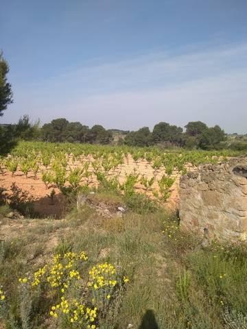 imagen 2 de Venta de terreno con viñedo en Batea (Tarragona)