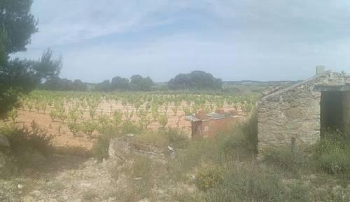 imagen 3 de Venta de terreno con viñedo en Batea (Tarragona)