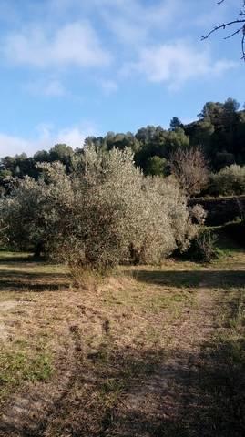 imagen 2 de Venta de olivar en Benifallet (Tarragona)
