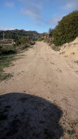 imagen 4 de Venta de olivar en Benifallet (Tarragona)
