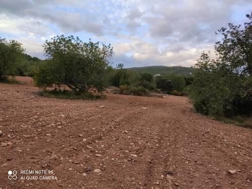 imagen 3 de Venta de finca de algarrobos y bosque en Vespella de Gaia (Tarragona)