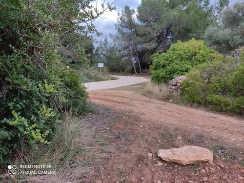 imagen 1 de Venta de finca de algarrobos y bosque en Vespella de Gaia (Tarragona)