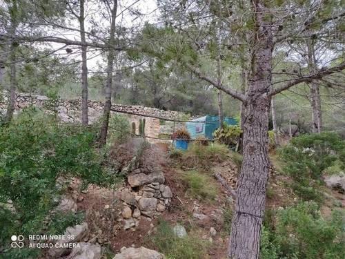 imagen 2 de Venta de finca de algarrobos y bosque en Vespella de Gaia (Tarragona)