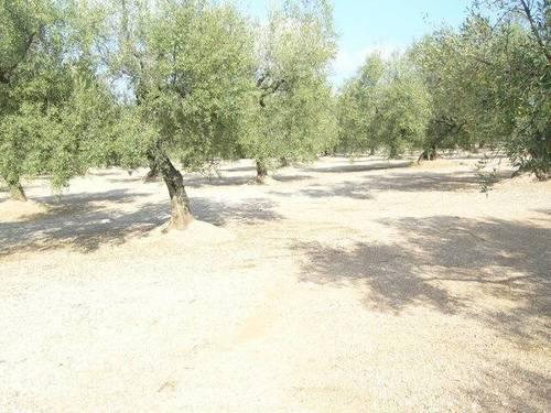 imagen 1 de Venta de terreno en La Galera (Tarragona)