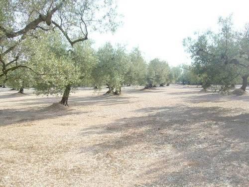 imagen 2 de Venta de terreno en La Galera (Tarragona)