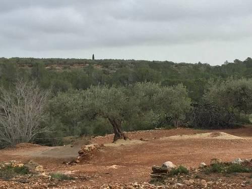 imagen 3 de Venta de finca con casa rural tradicional en L´Aldea (Tarragona)