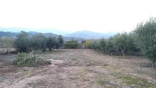imagen 2 de Venta de finca de olivos a pie de carretera en Riudoms