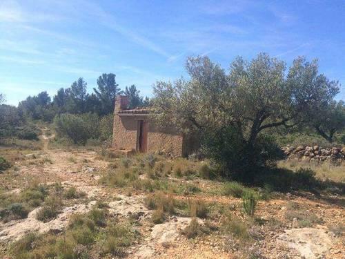 imagen 1 de Venta de finca con olivos y algarrobos en Hospitalet d´Infant (Tarragona)