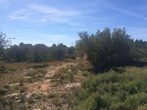 imagen 2 de Venta de finca con olivos y algarrobos en Hospitalet d´Infant (Tarragona)