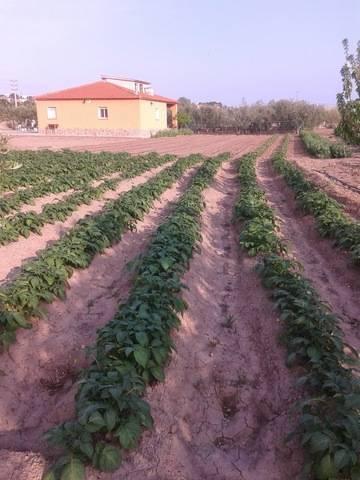imagen 2 de Venta de casa rural con terreno en Constanti (Tarragona)