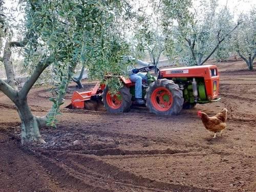 imagen 3 de Venta de casa rural con terreno en Constanti (Tarragona)