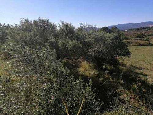 imagen 2 de Venta de finca para cultivar en Valldemoll (Tarragona)