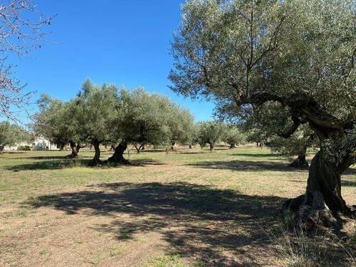 imagen 1 de Venta de casa rural ubicada en Godall (Tarragona)