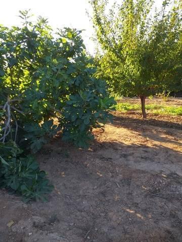 imagen 1 de Venta de terreno de regadío bien ubicado en Pallaresos (Tarragona)