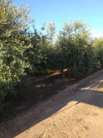 imagen 2 de Venta de terreno de regadío bien ubicado en Pallaresos (Tarragona)