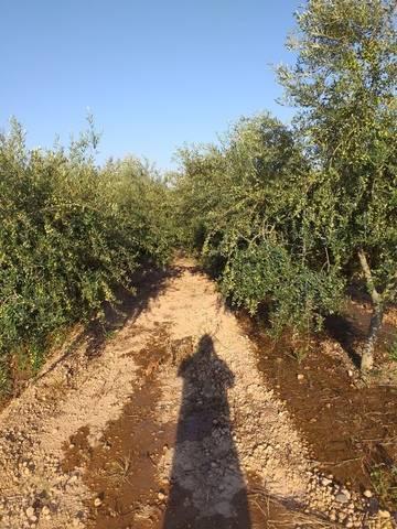 imagen 3 de Venta de terreno de regadío bien ubicado en Pallaresos (Tarragona)
