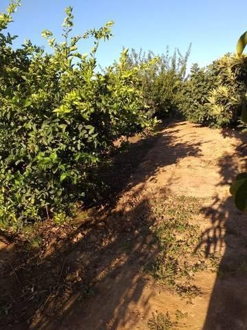 imagen 4 de Venta de terreno de regadío bien ubicado en Pallaresos (Tarragona)