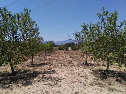 imagen 1 de Venta de terreno vallado de regadío en La Galera (Tarragona)