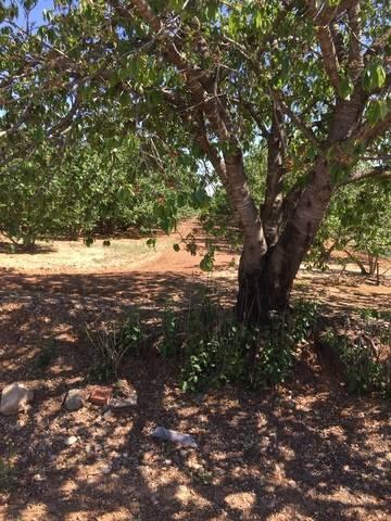 imagen 2 de Venta de terreno de avellanos en Constanti (Tarragona)