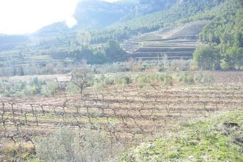 imagen 1 de vVenta de finca rústica de regadío en La Vilella Baixa