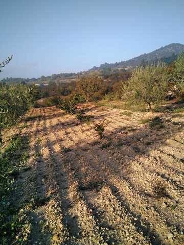imagen 1 de Terreno  con olivos y buen acceso en Cornudella del Montsant