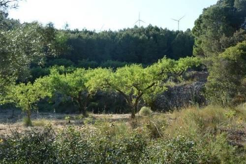 imagen 1 de Venta de finca rústica con almendros en Cabra del Camp