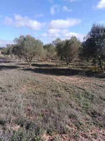 imagen 1 de Venta de casa rural con olivar en Esplugas de Francoli