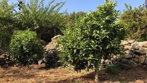 imagen 1 de Venta de finca vallada y con buen acceso en Garachico (Tenerife)