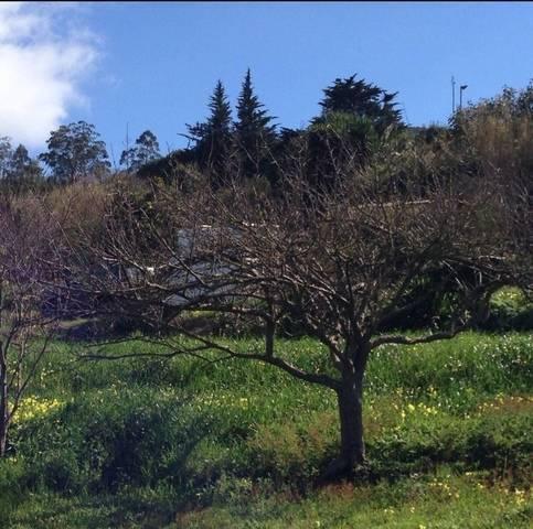imagen 3 de Venta de terreno con frutales en Tenerife