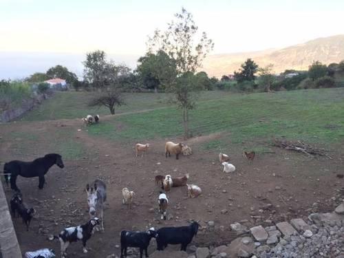 imagen 6 de Venta de finca con vivienda y terreno para animales en Los Realejos (Tenerife)