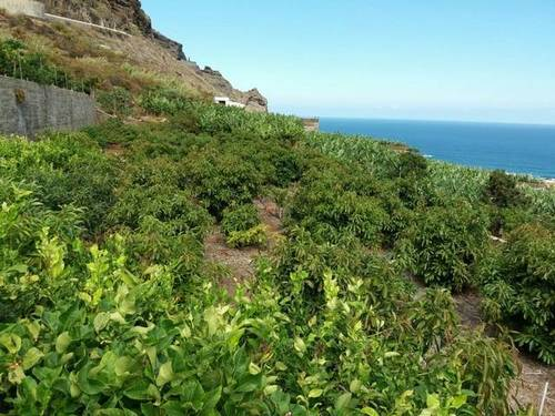 imagen 1 de Se vende finca con frutales en Buenavista del Norte (Tenerife)