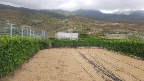 imagen 2 de Venta de finca rústica con vivienda en Güímar
