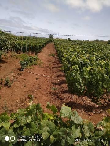 imagen 1 de Venta de finca con vivienda y viñedo en El Sauzal (Tenerife)