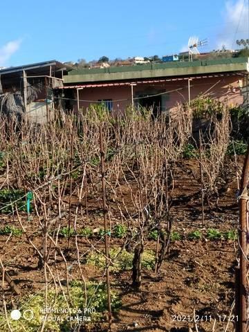 imagen 2 de Venta de finca con vivienda y viñedo en El Sauzal (Tenerife)