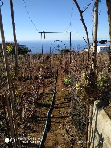 imagen 4 de Venta de finca con vivienda y viñedo en El Sauzal (Tenerife)